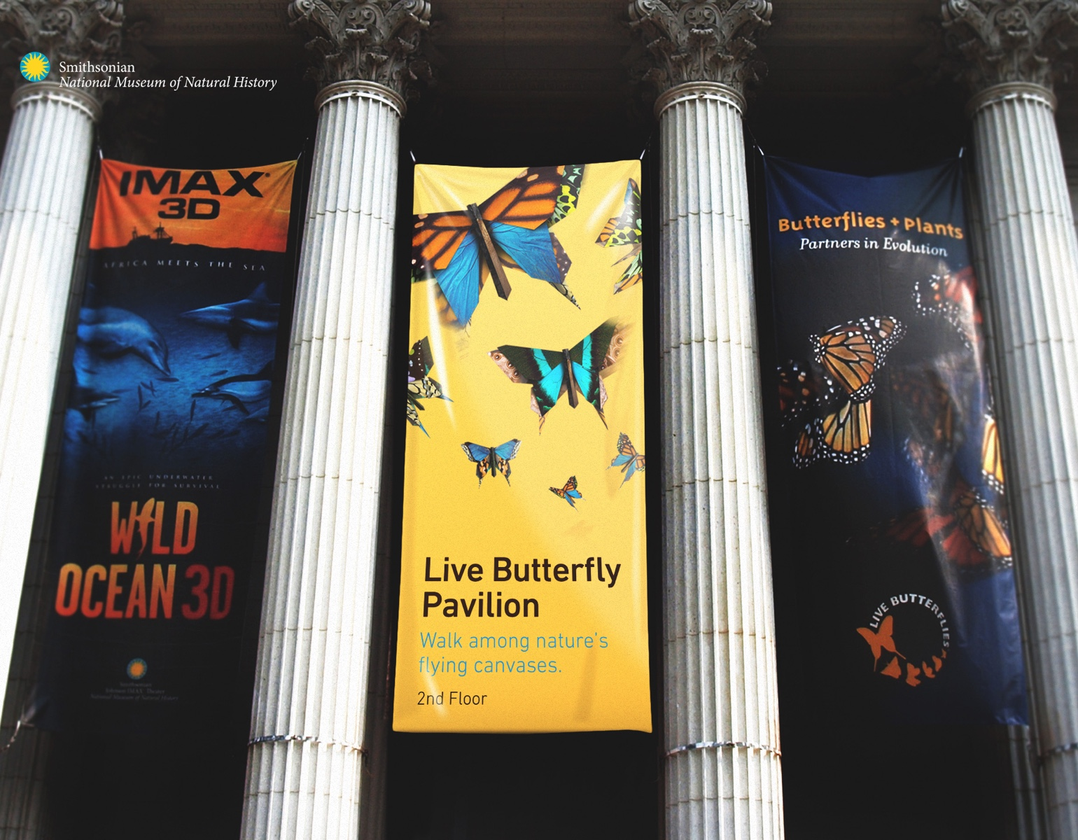 REQ Smithsonian Butterfly Pavilion Banner